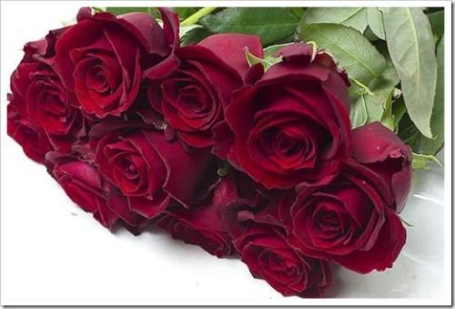 Цветы розы – значения