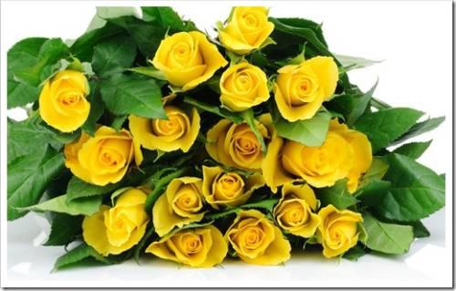 Белые и жёлтые розы