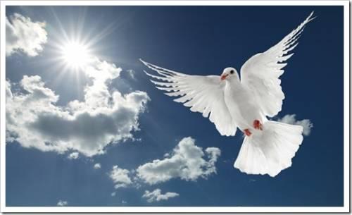 Запуск белых голубей на свадьбе летом