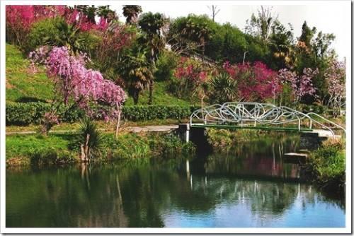 Дендрологический парк: зелень и кислород
