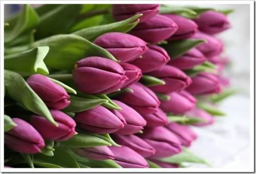 Доставка цветов весной