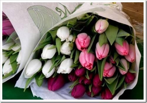 Заказ тюльпанов