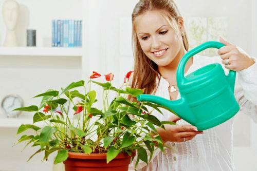 Какие цветы нельзя выращивать дома