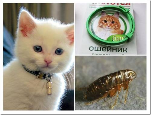 Аллергия у кошек на ошейники