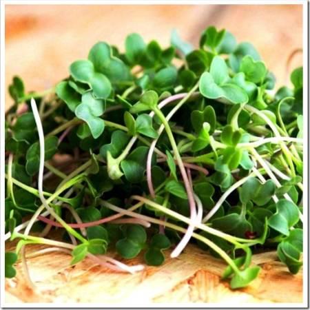 Почему микрозелень так полезна?